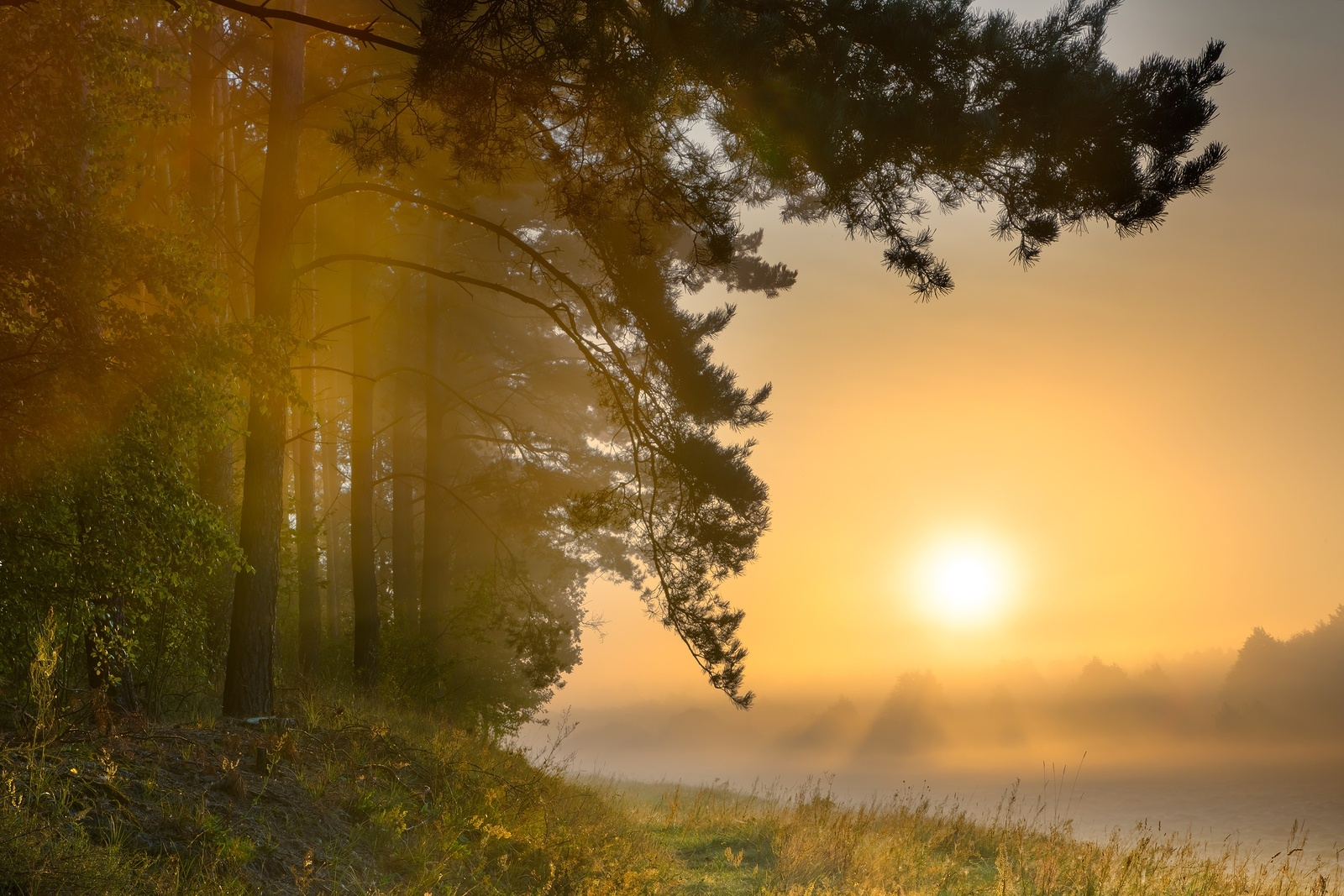 bigstock-Foggy-Morning-On-Polish-Meadow-86146340.jpg
